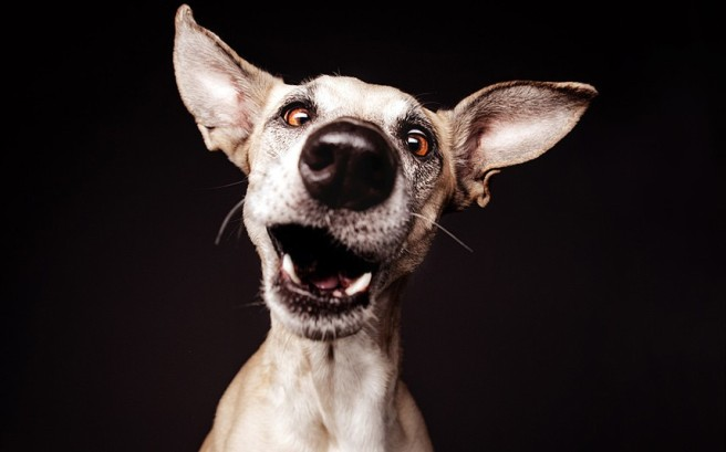 dogs-ears-dNR_2863371k